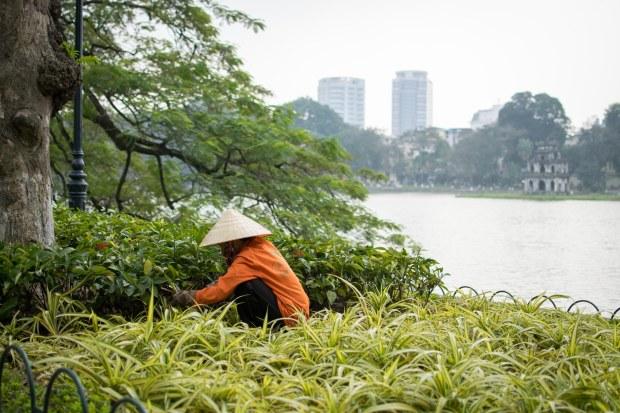 Gardening in Hanoi