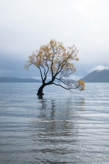 Tree in the lake in Wanaka